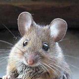حکایت موش و تله...!